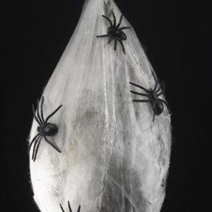 Animoitu Hämähäkin Munakotelo