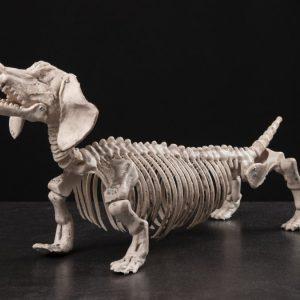 Luuranko Koira